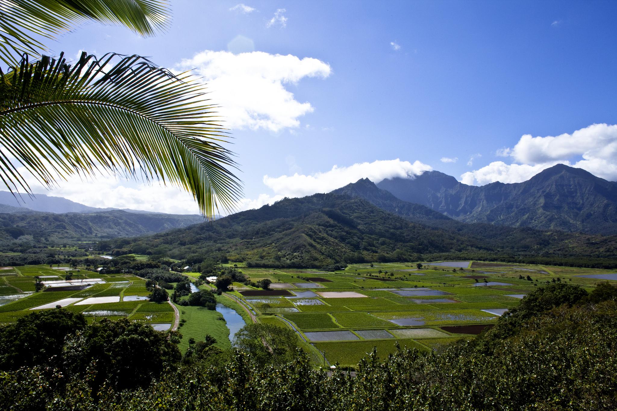 Kauai fields