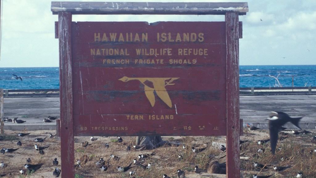 Tern Island