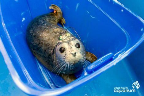 vancouver_aquarium_seals_2
