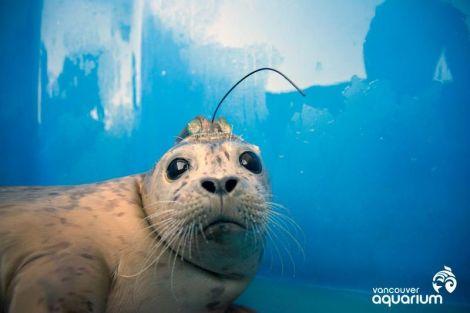 vancouver_aquarium_seals_3