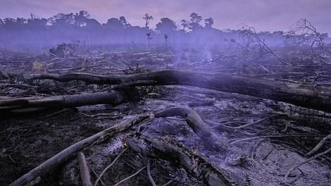 Amazon rainforest, near Manaus, Brazil