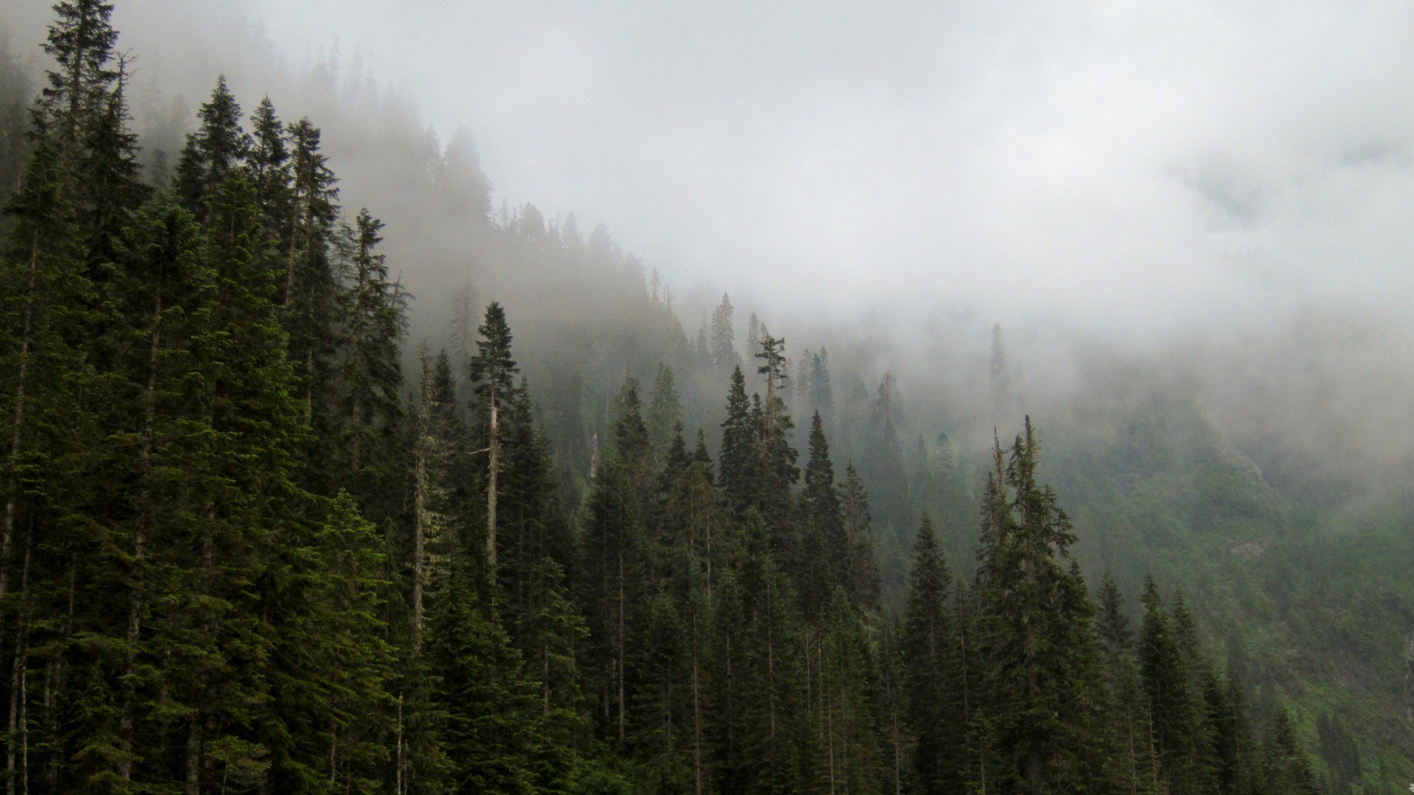 BC forest