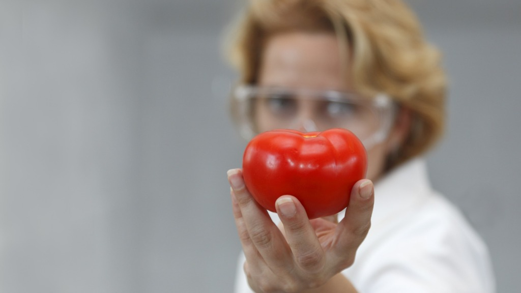 GMO tomato, anybody?