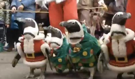 penguins in santa suits