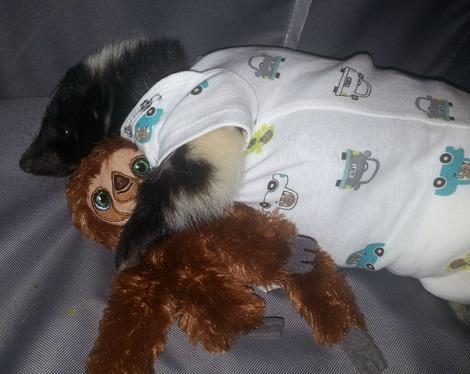 baby-skunk-onesie-sloth