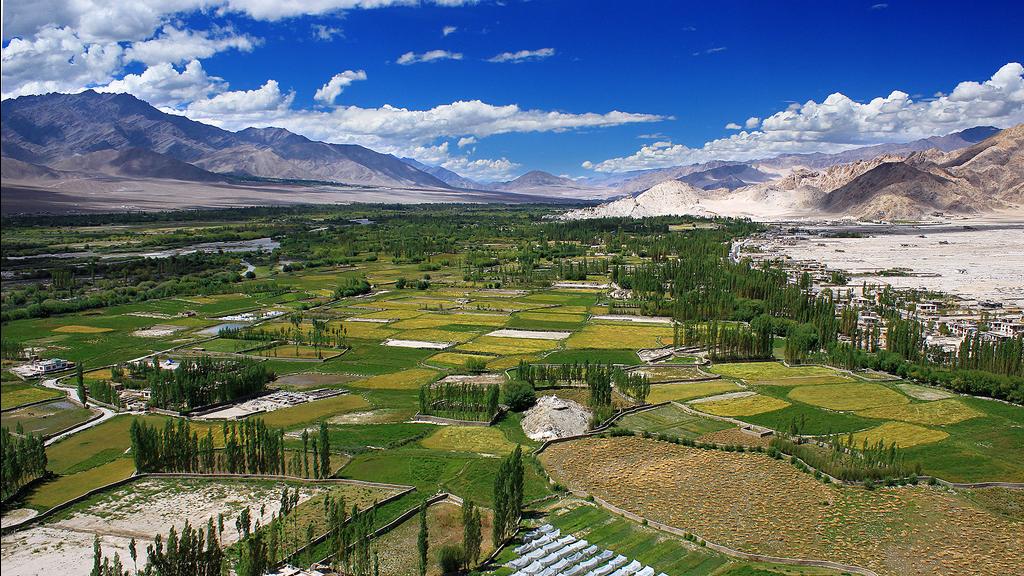 Farming in the Indus Valley, Ladakh.