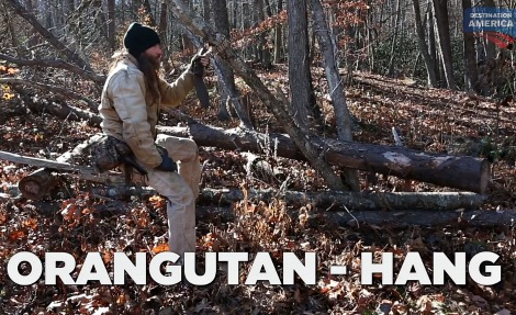orangutan-hang