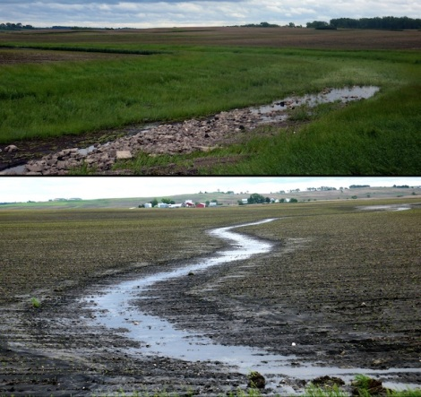 A tale of two fields: On one side of the road, a gully cuts through an unprotected field (bottom photo). On the other side (top) a grass waterway stops the gully, but is filled with rocks and mud from the other side.
