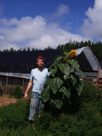 Andy Charlton, Grist fan and sunflower wrangler.