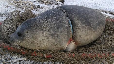 Entangled ring seal.