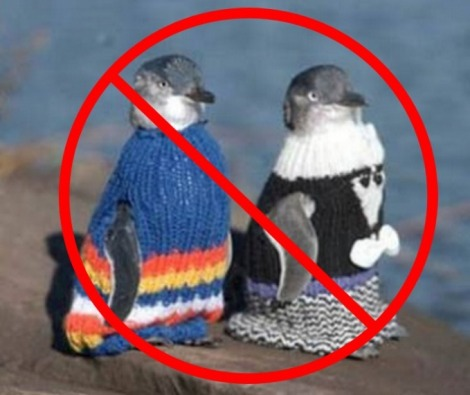 no-sweater-penguins-VERY-BAD