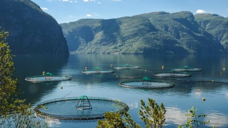 This is what a salmon farm looks like, in case you wanted to know.