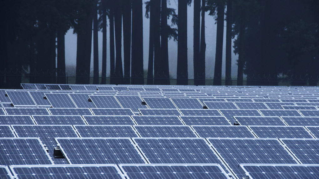 solar farm in front of trees