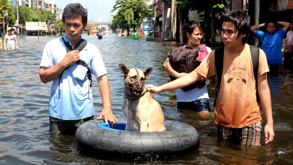 Citizens rescue a dog from the flood of November 2, 2011 in Bangkok, Thailand.