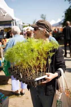 JoeAnn Hart at the Cape Ann Farmers Market.