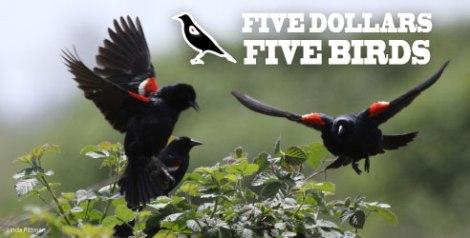 5-dollars-5-birds