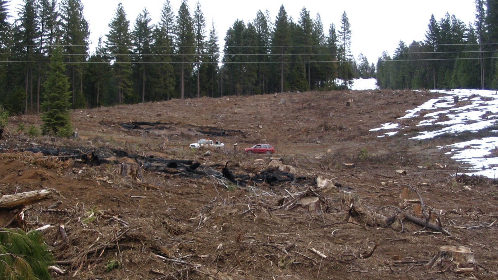 Clearcutting in in Tuolumne County