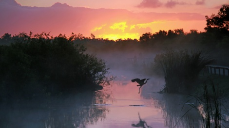 florida-everglades-heron-sunset