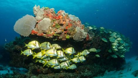 great-barrier-reef-ocean-fish