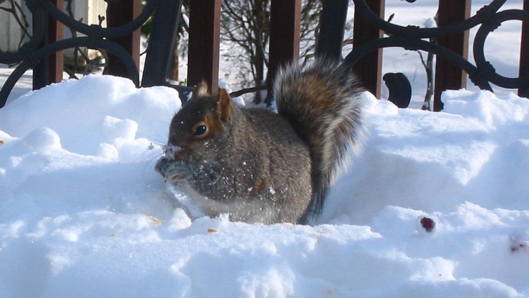 Bridenstine squirrel