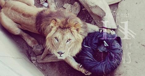 lion_jeans