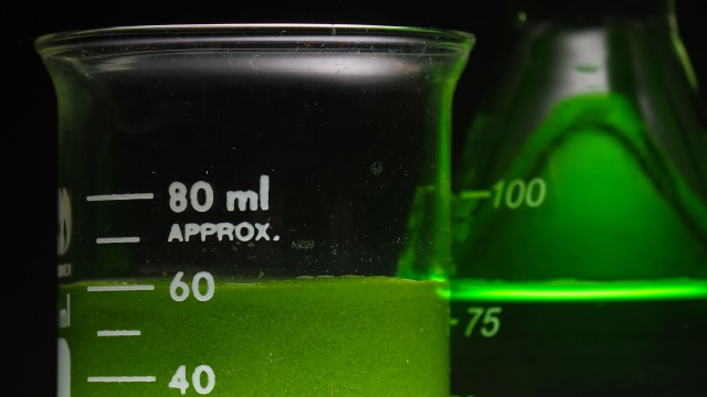 algae biofuel in beaker