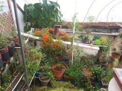 garden pool plants