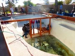 garden pool volunteers