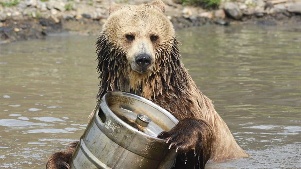 Bear with beer
