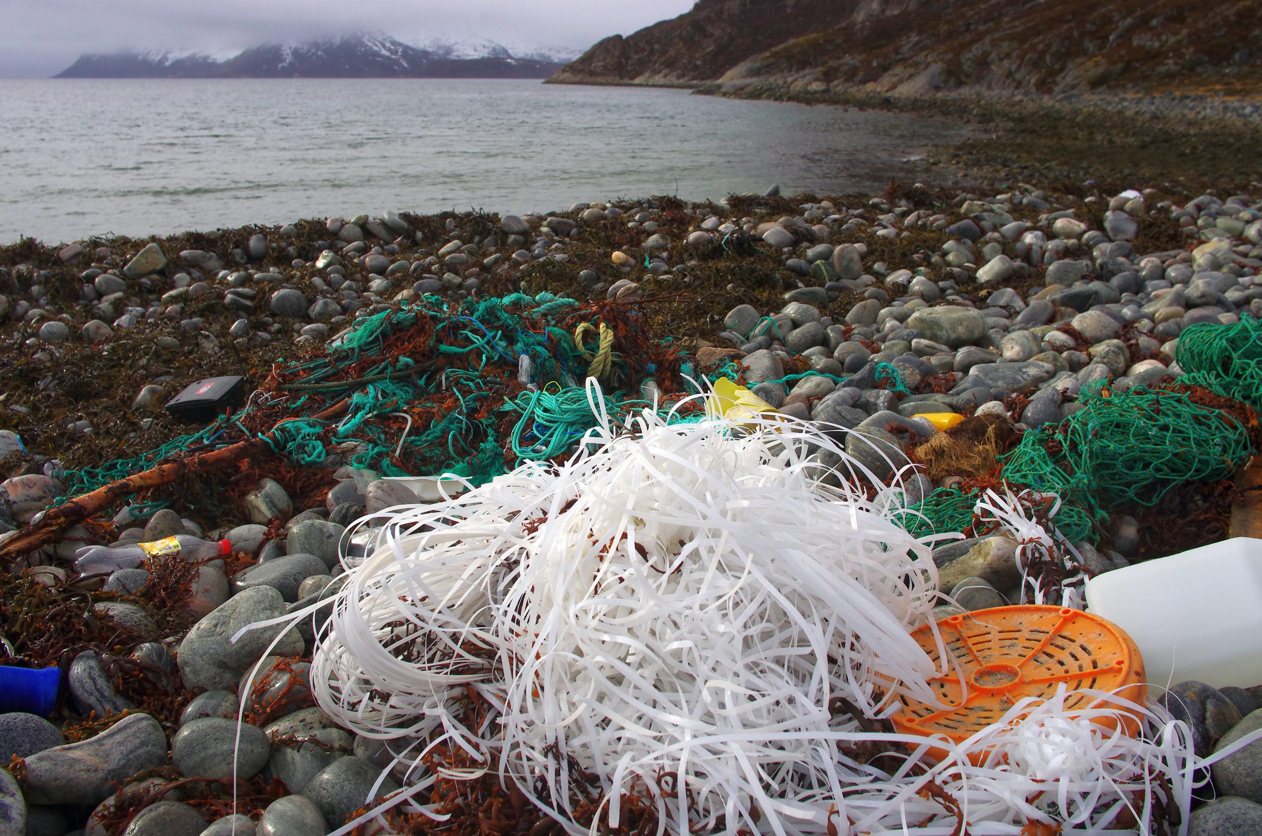 marine debris on beach