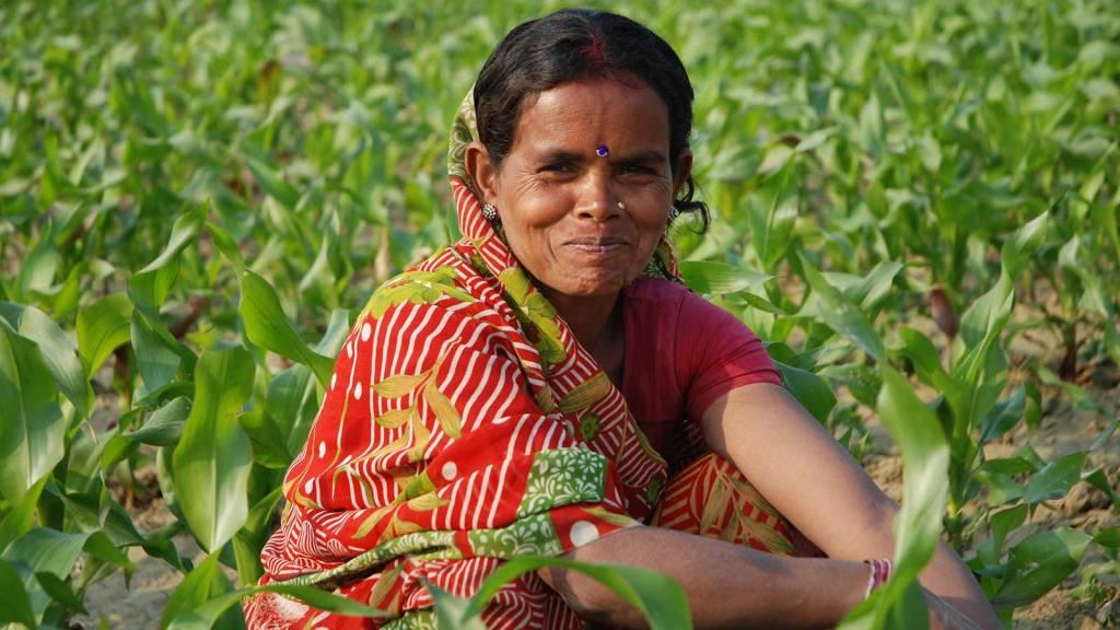 Indian farmer weeding maize
