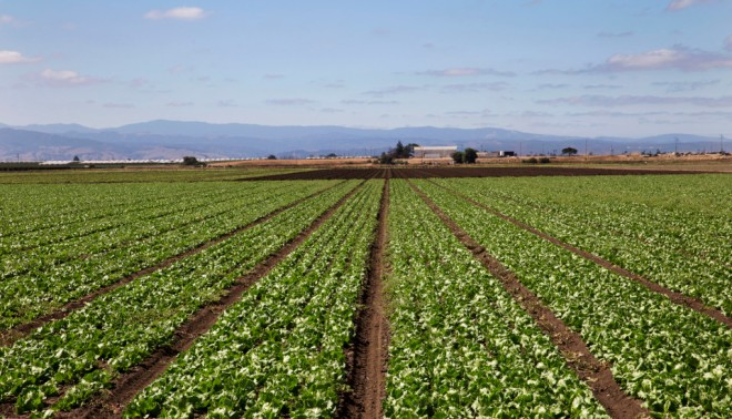 """Monterey County is home to the Salinas Valley, known as the """"salad bowl of the world."""""""
