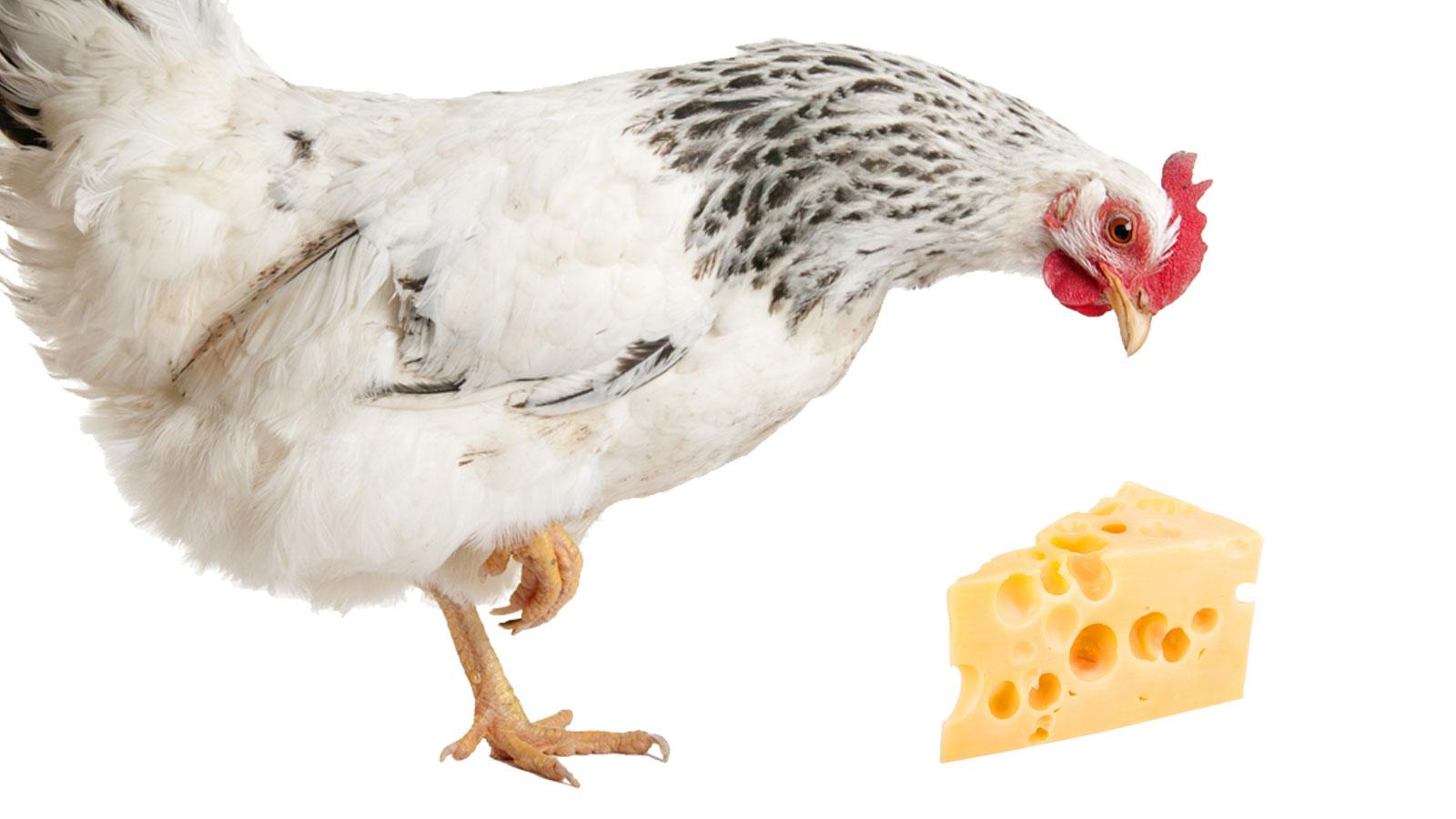 Chicken vs. Dairy