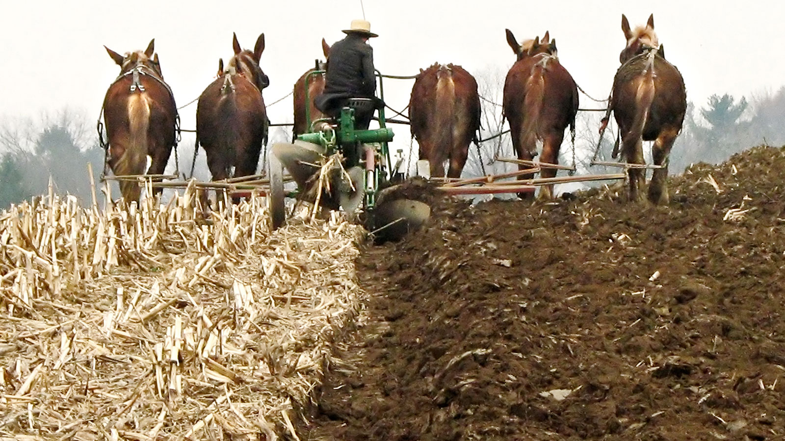 The dark side of Amish farms