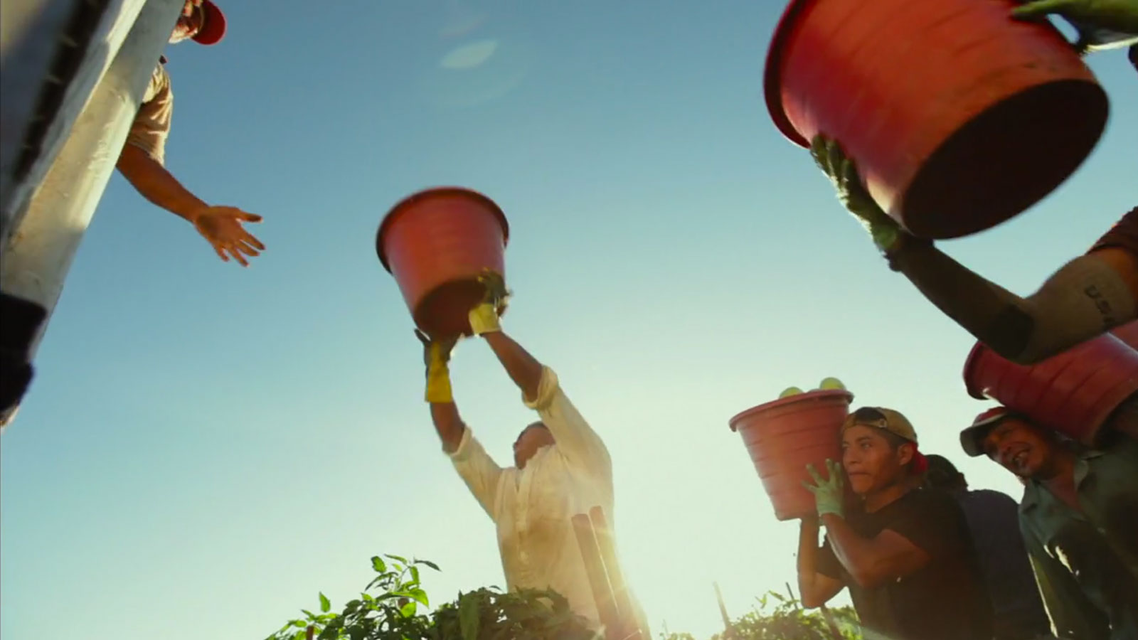 A shot of farm workers from the documentary