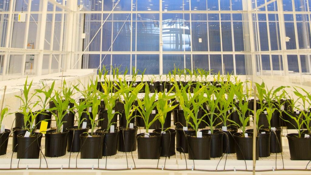 High-tech greenhouse
