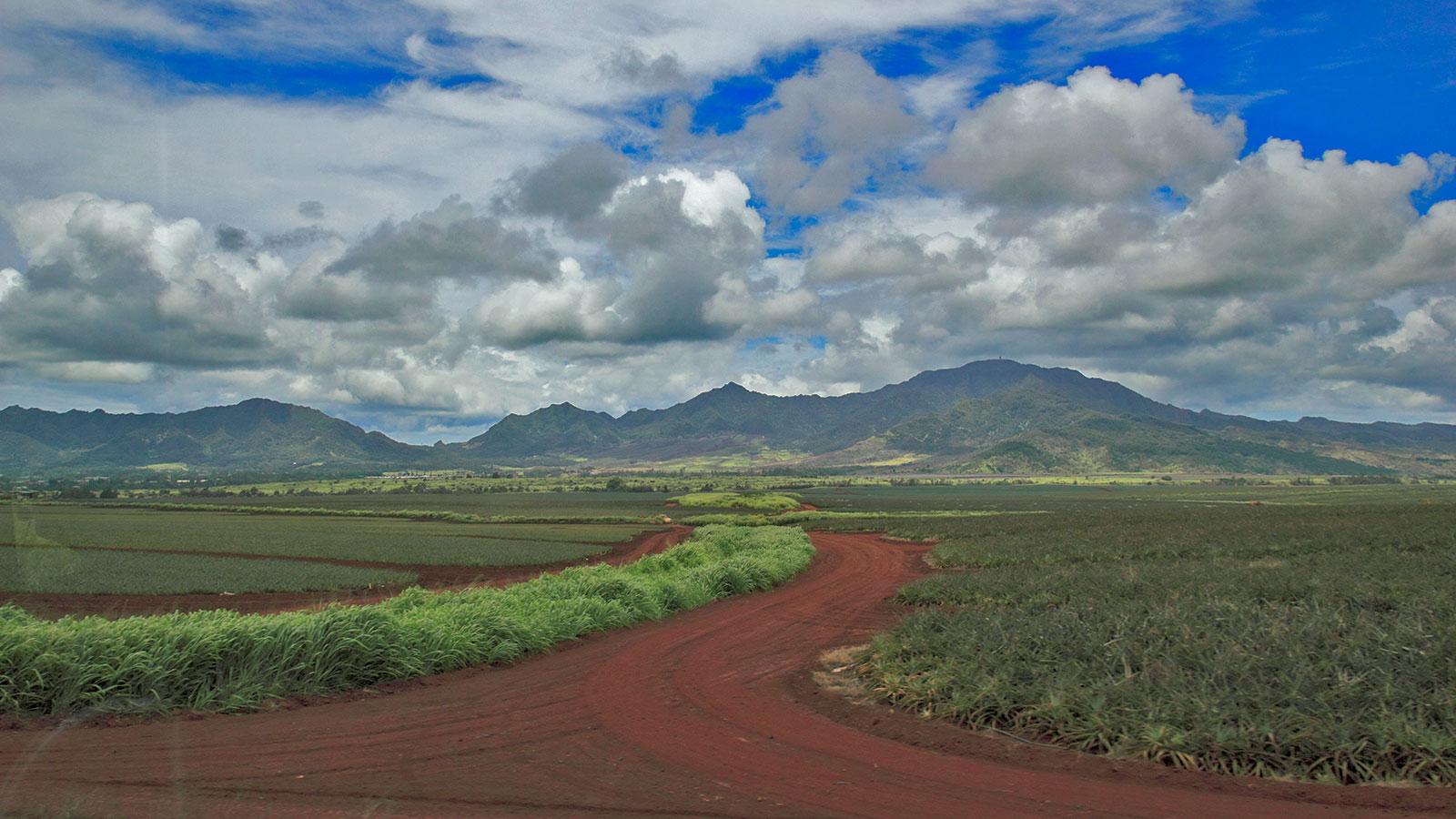 Farm in Hawai'i