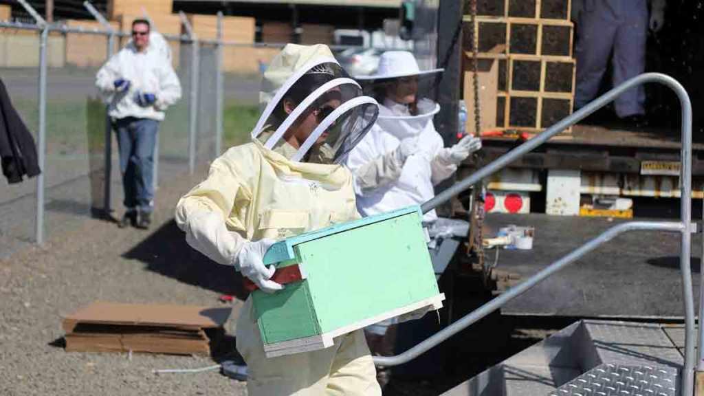 Susannah Austin with honey bee colonies