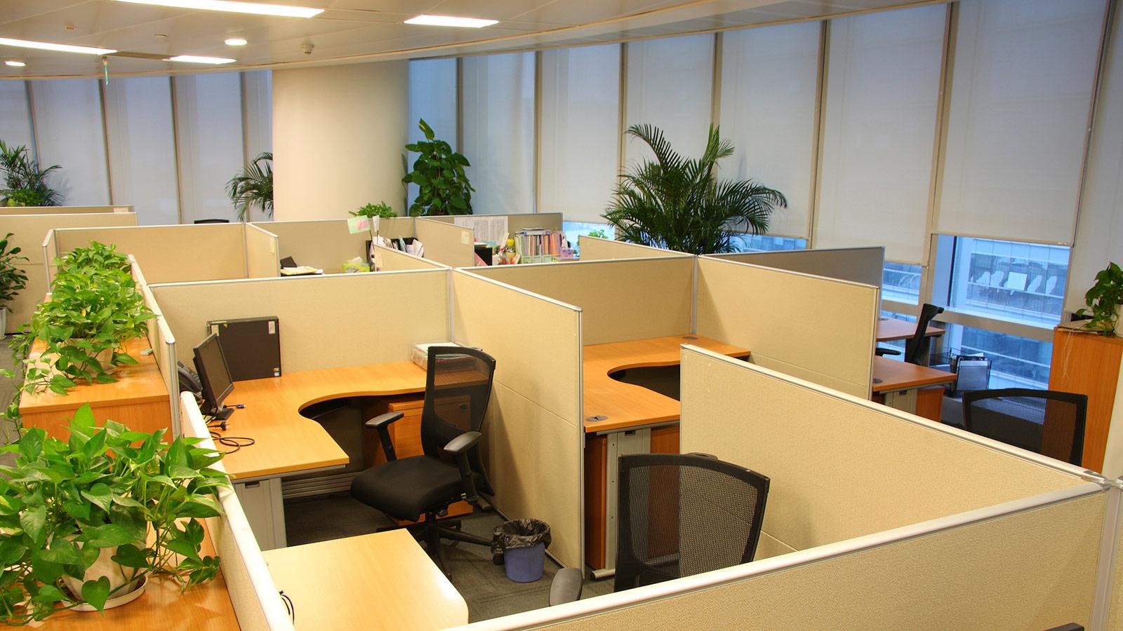 Green plants in an office