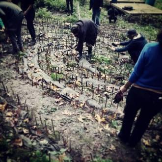 mushroom people working