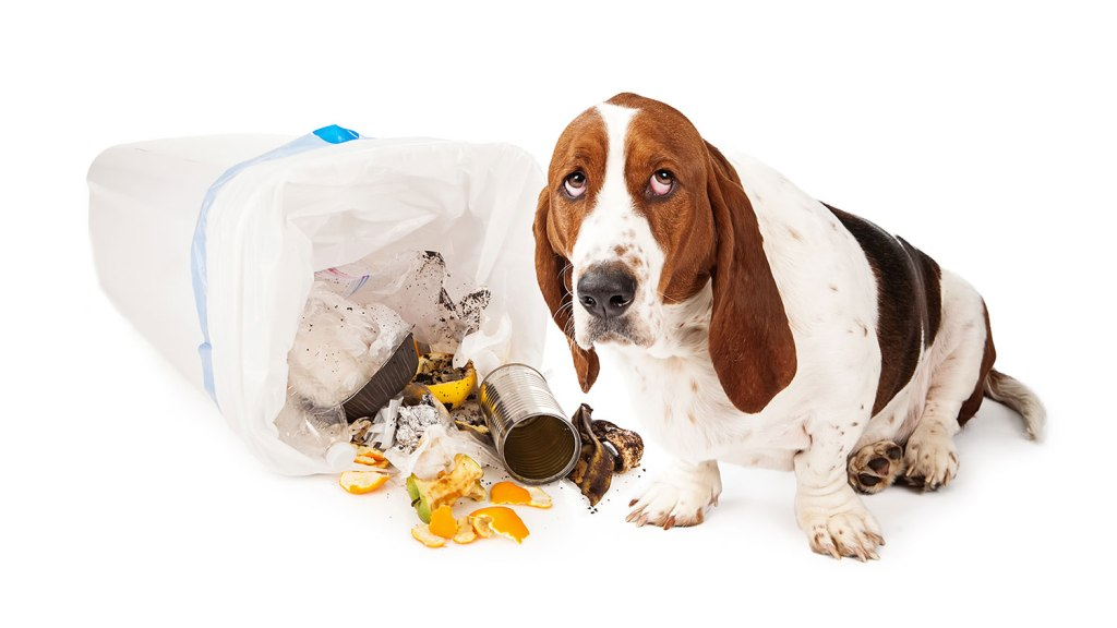 Trash can dog