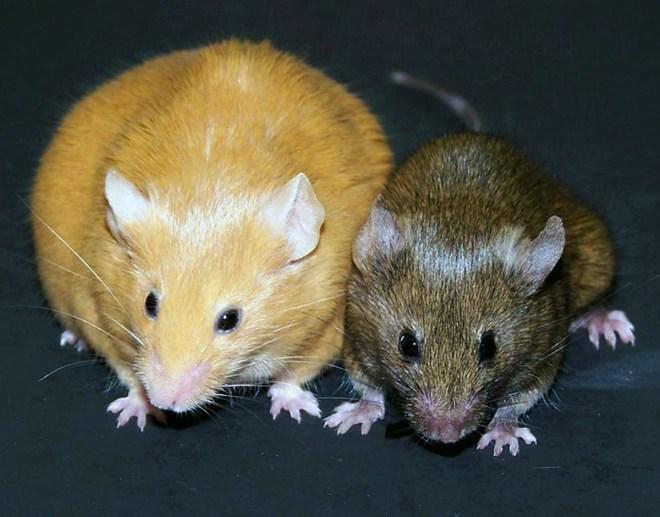 Cheeto Mouse