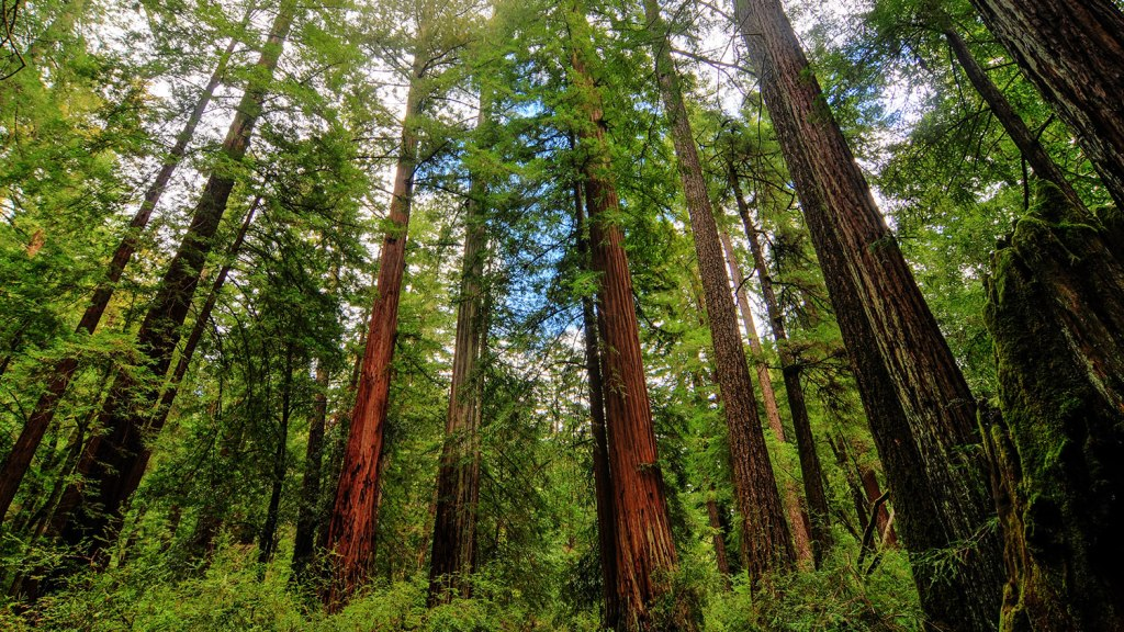 California Shrinking Trees