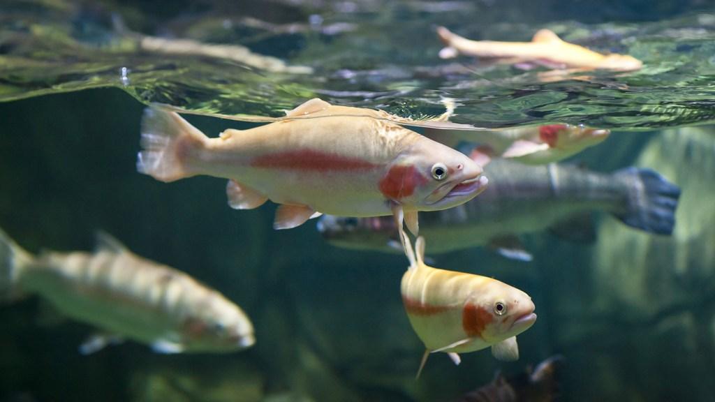 Fish swimming in river