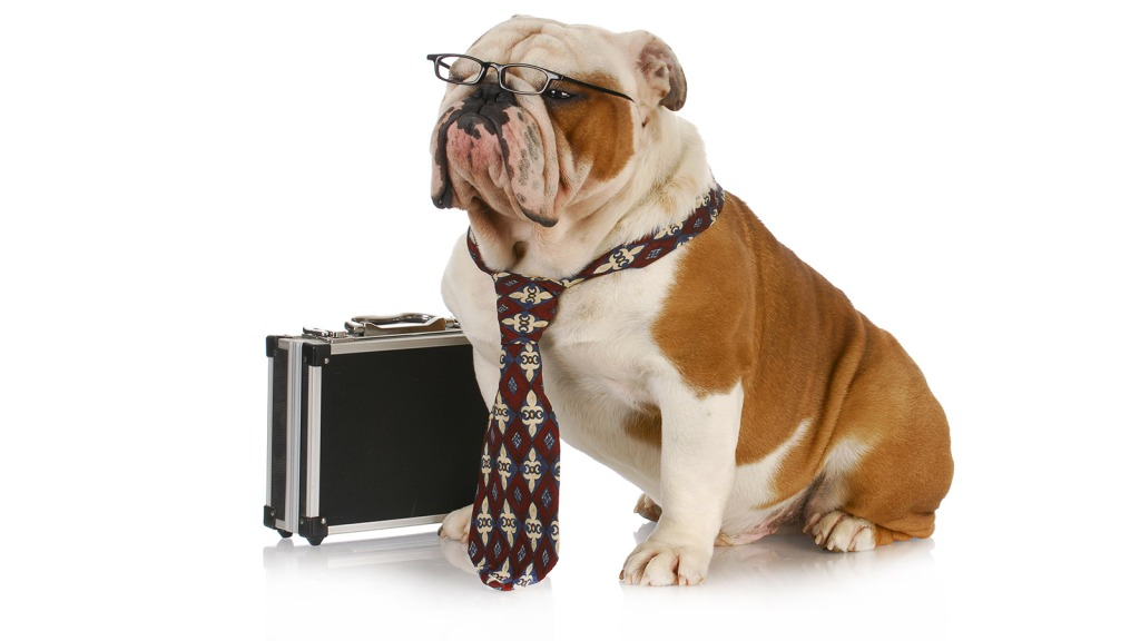 Dog with briefcase and tie
