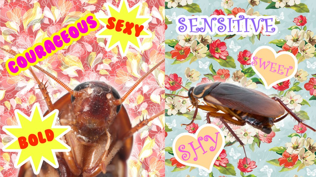 Which kind of cockroach are YOU?