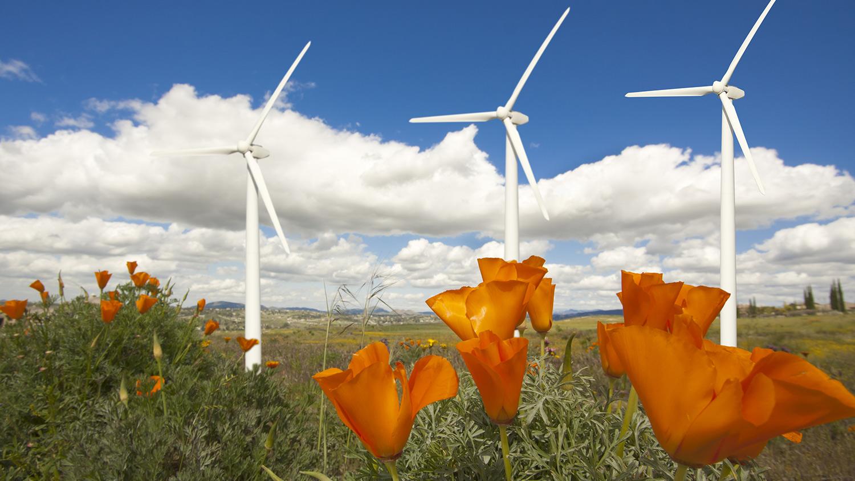 wind turbines and flowers