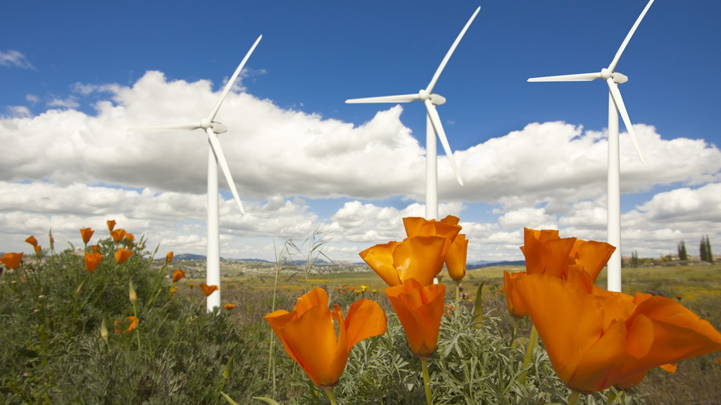 wind turbines and flowers