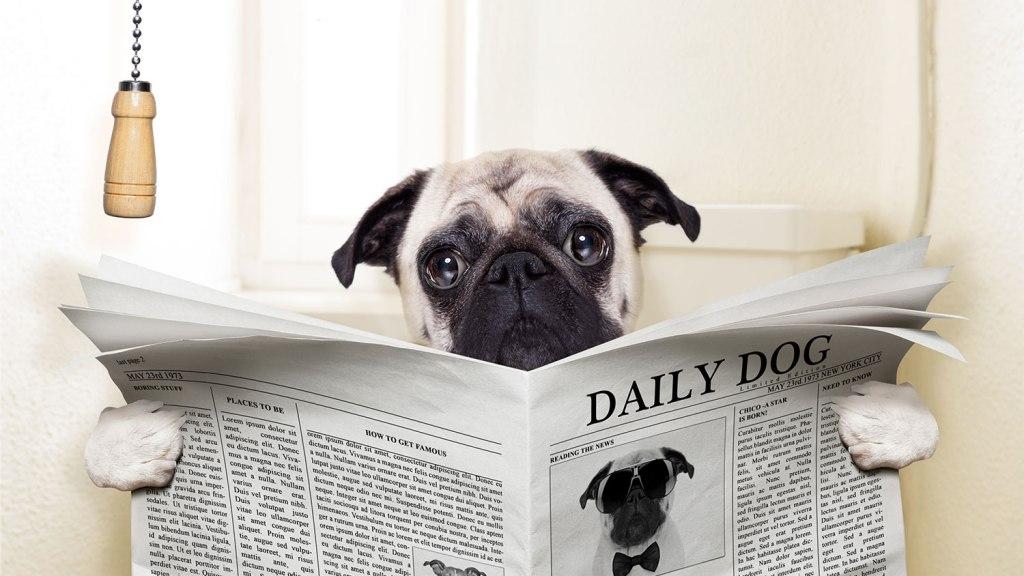 Daily dog, daily doo