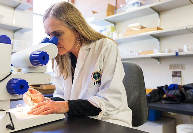 Diana Six in her lab at the University of Montana.